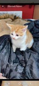 Adoreble kittens