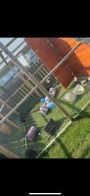 Rabbit & small animals home boarding 🐇🏡