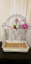 Budgies with large cage