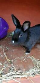 1yr old rabbit Ruby