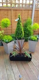 Freshly made Garden Plants