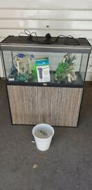 180 litre fish tank and stand full setup 12