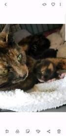 Adorable fluffly Kittens