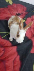 golden spot bunnies looking for new home