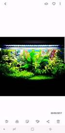 Fish tank Lights