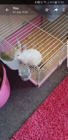 Pure white rabbit 5 months old lovely rabbit