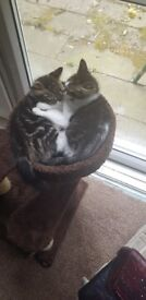 Kittens 15 weeks old