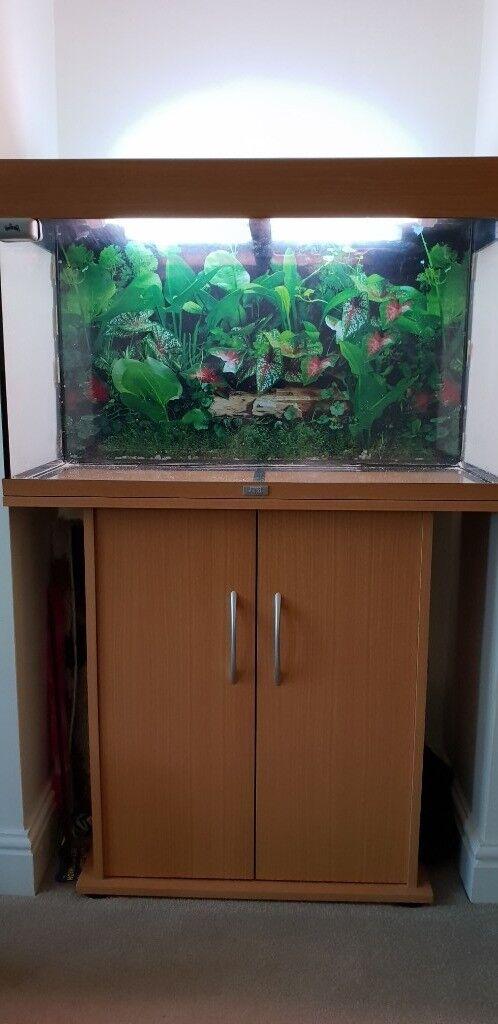 juwel rio 125 aquarium and stand in rochester kent gumtree. Black Bedroom Furniture Sets. Home Design Ideas