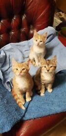 Kittens - Lovely friendly kittens for sale