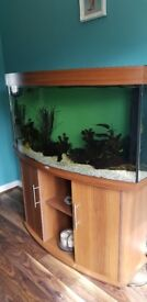 Juwel 260 litre fish tank with heater, filter, ornaments ect and tropical fish if wanted