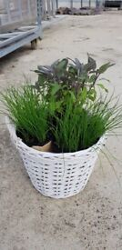 White Large Waterproof real rattan basket/pot/planter/container