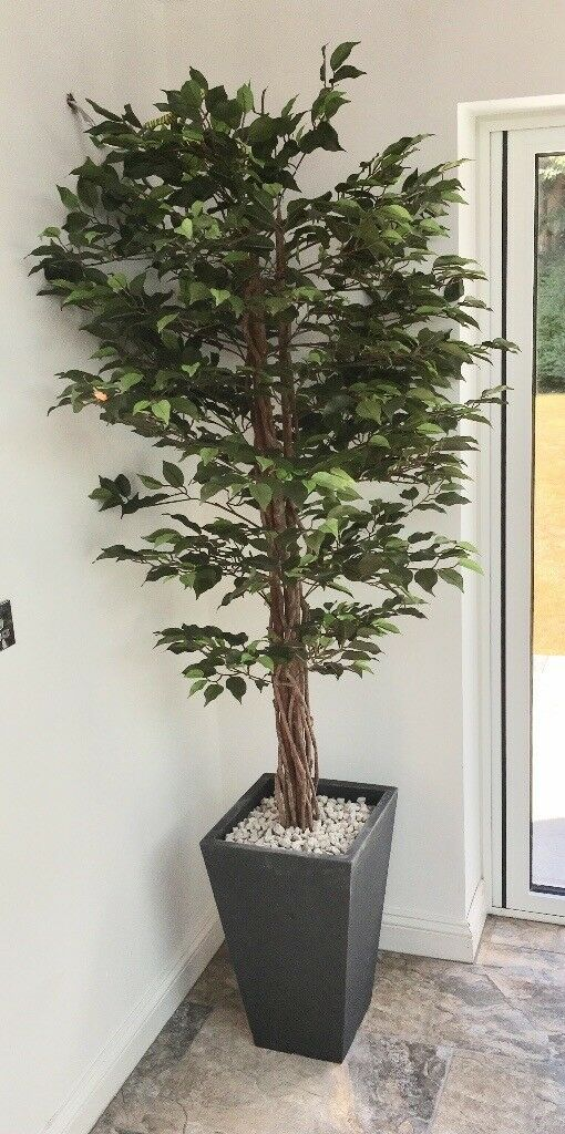 Two large artificial indoor plants | in Plymouth, Devon | Gumtree