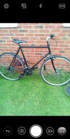 Mans bike 23in frame bike