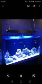 NOW SPLITTING THIS DOWN, OFFERS OR PRICES ON REQUEST Marine fish tank aquarium,Ledzeal