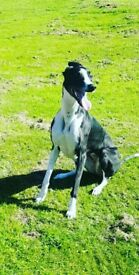 3 year old lurcher called Tilly. She is brilliant with children and come from a family home.