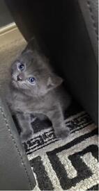 ❣️❣️Lovely half Bengali kittens ❣️❣️