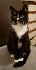 Loving 1 year old cat for sale.Have to sell due to family commitments.