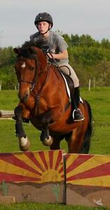Riding Lessons, Horsemanship, Equestrians DAY CAMPS all summer