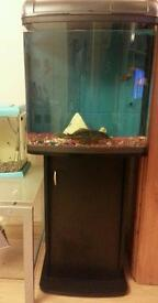 Fish tank with cabinet. Full tropical set up with tropical fish