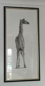 Young Giraffe 2, Signed Limited Edition Print By Clive Meredith
