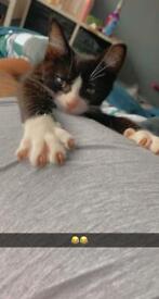 Kittens 16 weeks old