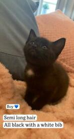 1 boy kittens looking for family home*