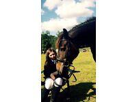 Lovely pony for part share