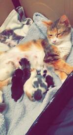Kitten ready 25th June