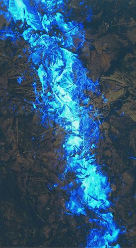 Luminol same stuff I sell to the FBI Bluestar bl-250