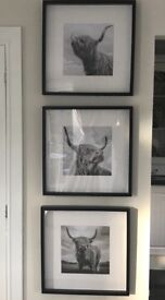 framed picture/photos highland cows