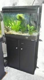 Tropical fishtank