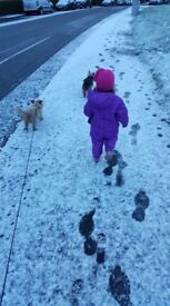 Fully insured Pet Sitter and Dog Walker Glasgow Westend and Finnieston