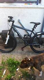 Mountain bike genesis core 10 very clean bike wheel size 26.2.35