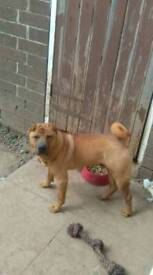 10 month pup for rehome