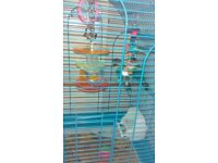 2 lovebirds for sale with cage