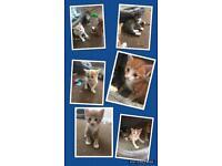 Three tiny kittens all boys 💙