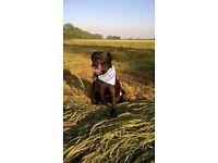Walkies with Beth: dog walking, pet feeding, vets visits