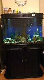 CLEARAIR TOP END 380 LITRE PROFESSIONAL AQUARIUM, WITH CABINET FULL MALAWI SET UP. QUICK SALE.