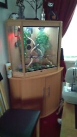 Large corner vivarium and stand 37 inch wide 57 inch high.