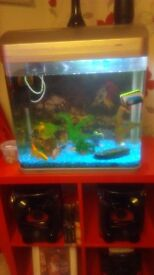 50l fish tank with gold fish