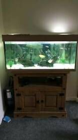 Fish tank set up