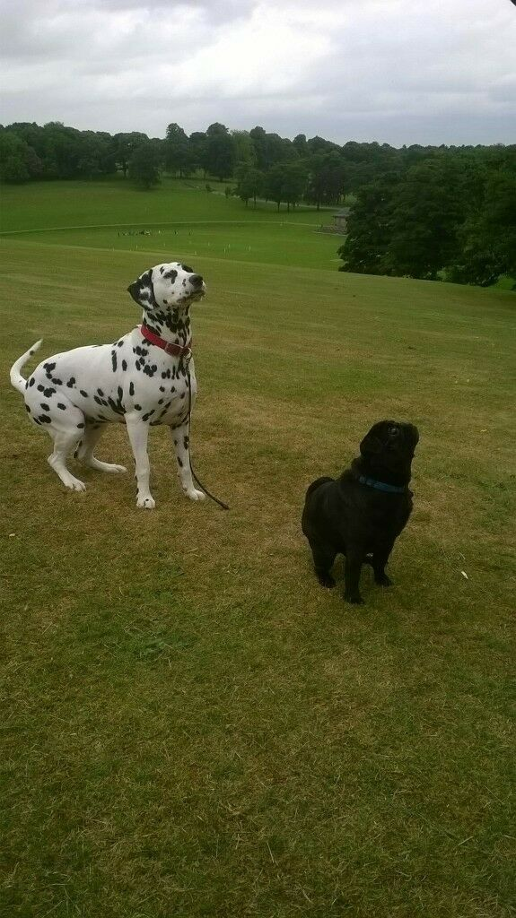 DOG WALKING/ DOG BOARDING/ DAY CARE /CHAPEL ALLERTON LEEDS LS7