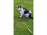 black and white kitten 🐱