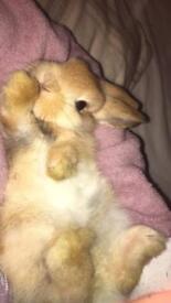 Beautiful bunnies