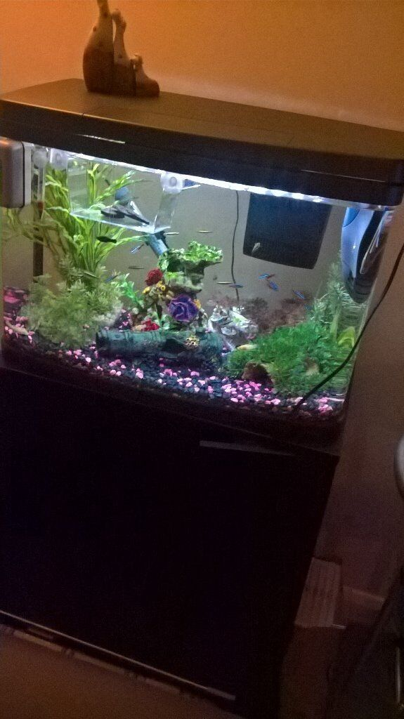 black panorama fish tank and black stand