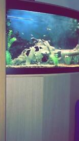 Fluval 180 litre fish tank with cabinet