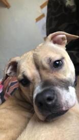 10 month old female dog called Kiera