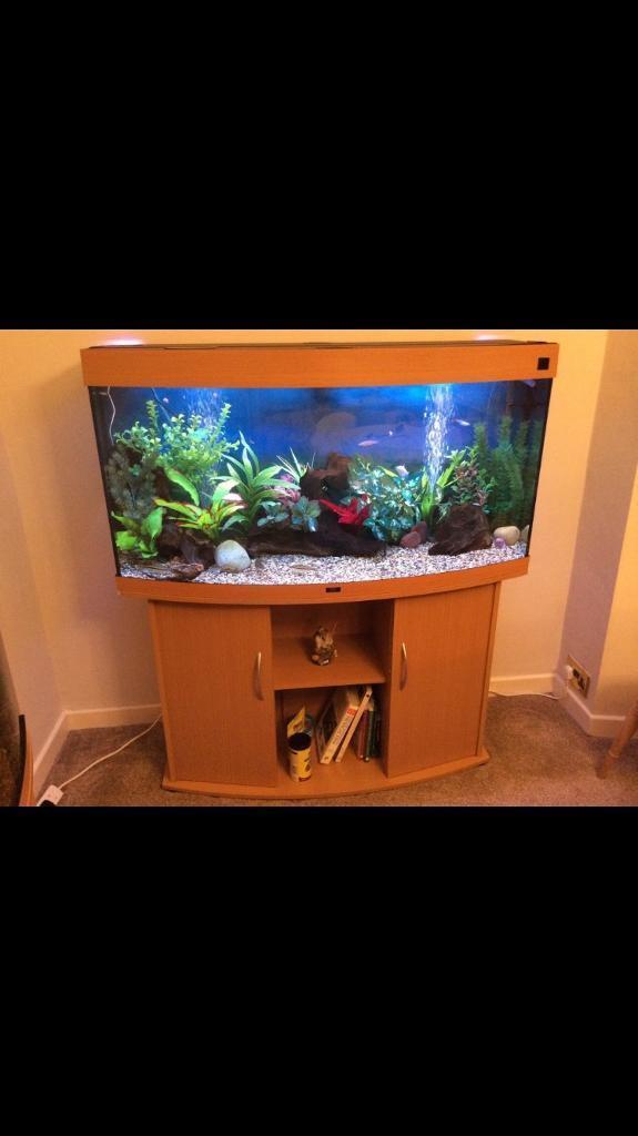 Juwel vision 260L bowfronted 4footer fish tank Aquarium