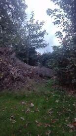 Large Fallen Tree - free
