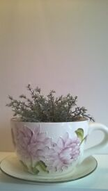 Large Teacup Planter with Saucer